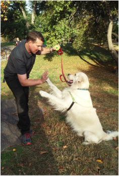 Drew Watson, Certified Professional Dog Trainer, AKC CGC Instructor and Evaluator, NYC (Upper West Side)